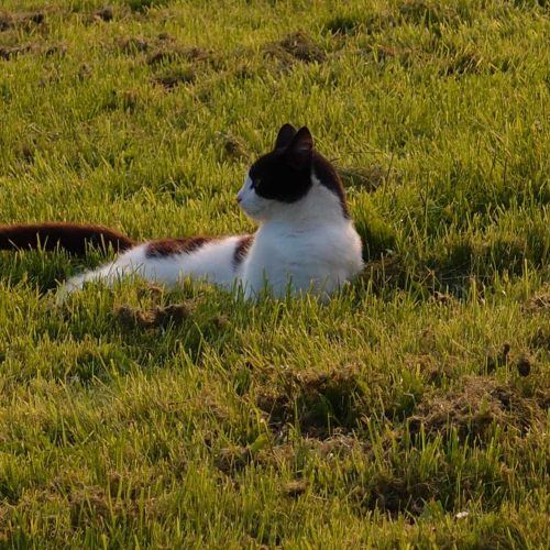 Family Cat lazing on the grass at Upper Heath Farm Accommodation in South Shropshire UK